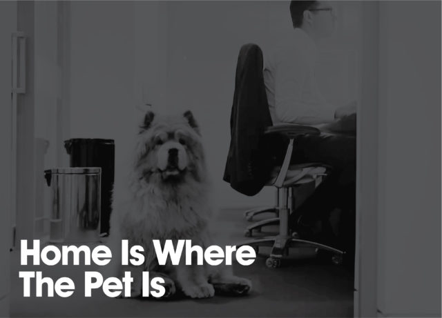 Home is where the pet is thumbnail